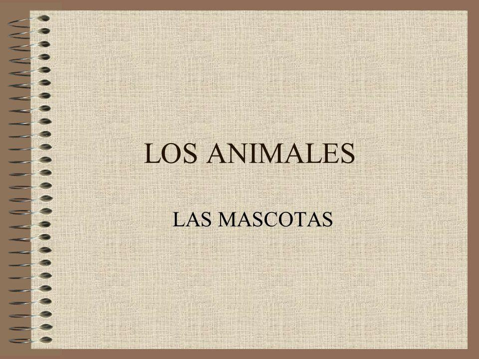 LOS ANIMALES LAS MASCOTAS
