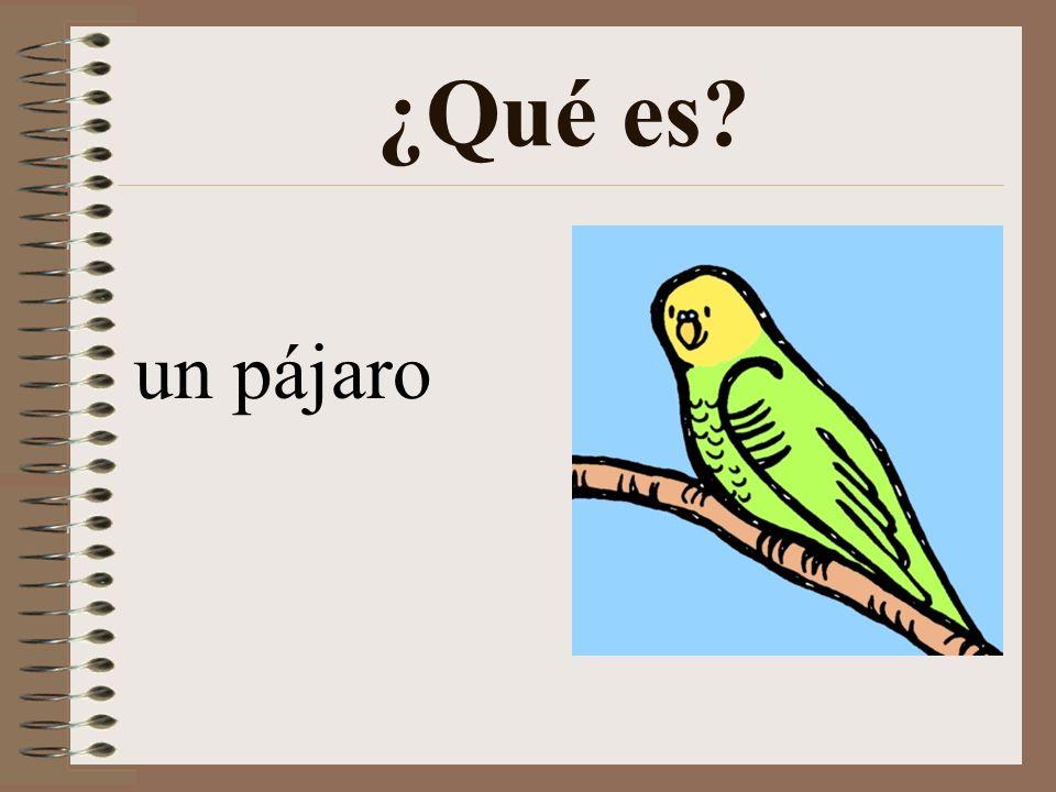 ¿Qué es un pájaro