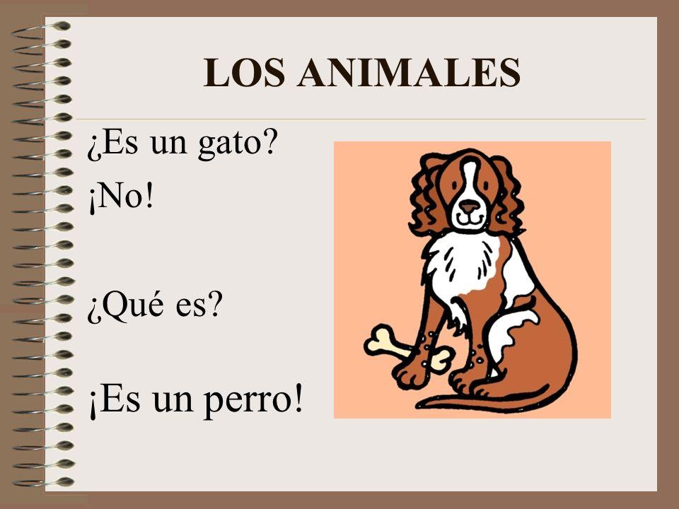 LOS ANIMALES ¿Es un gato ¡No! ¿Qué es ¡Es un perro!
