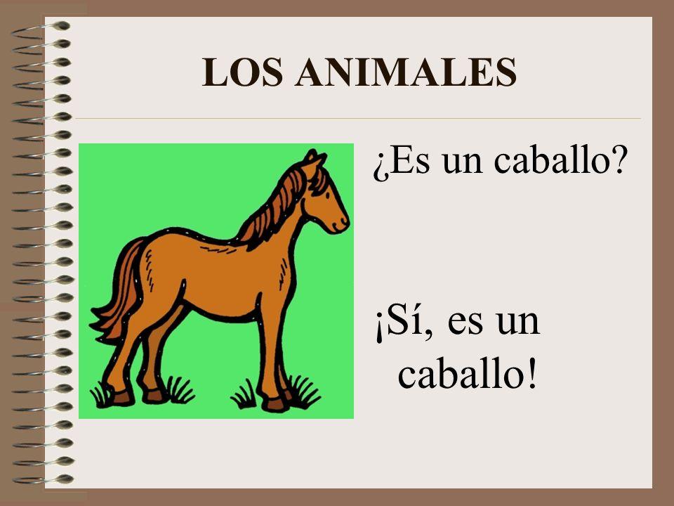 LOS ANIMALES ¿Es un caballo ¡Sí, es un caballo!