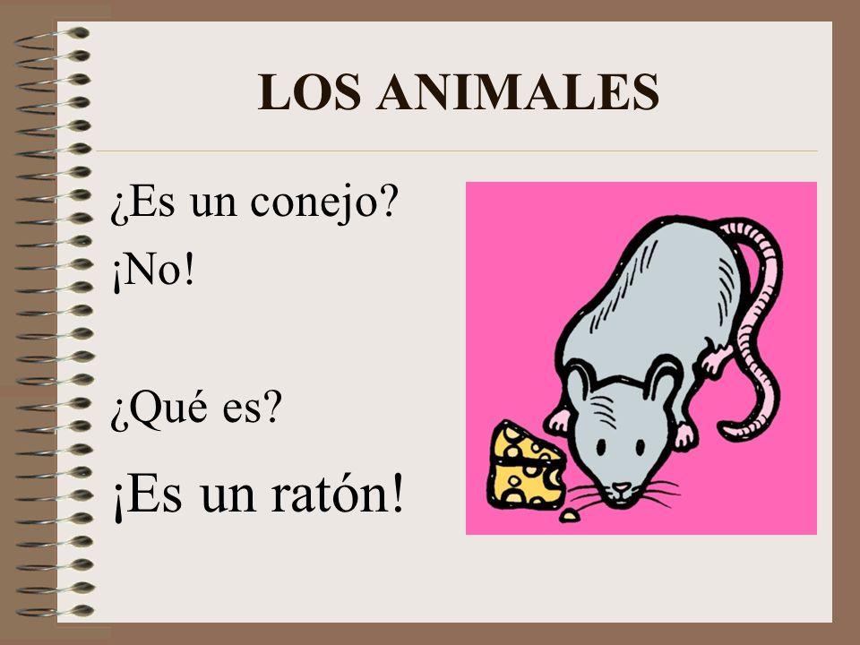 LOS ANIMALES ¿Es un conejo ¡No! ¿Qué es ¡Es un ratón!