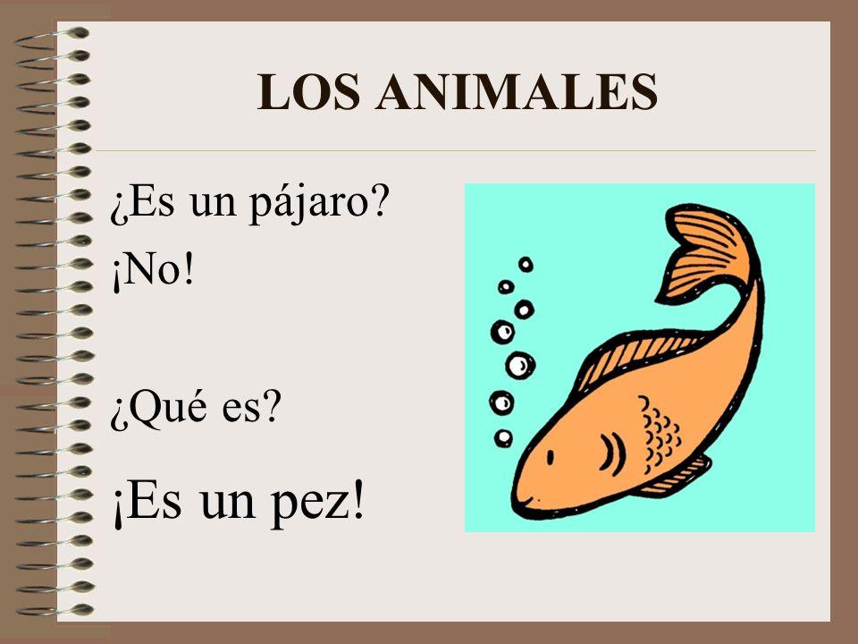 LOS ANIMALES ¿Es un pájaro ¡No! ¿Qué es ¡Es un pez!