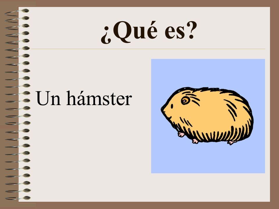 ¿Qué es Un hámster