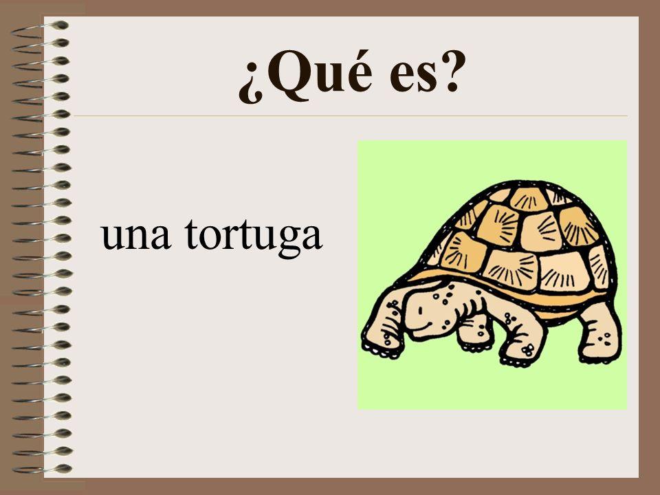 ¿Qué es una tortuga
