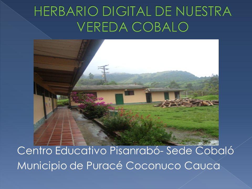 HERBARIO DIGITAL DE NUESTRA VEREDA COBALO