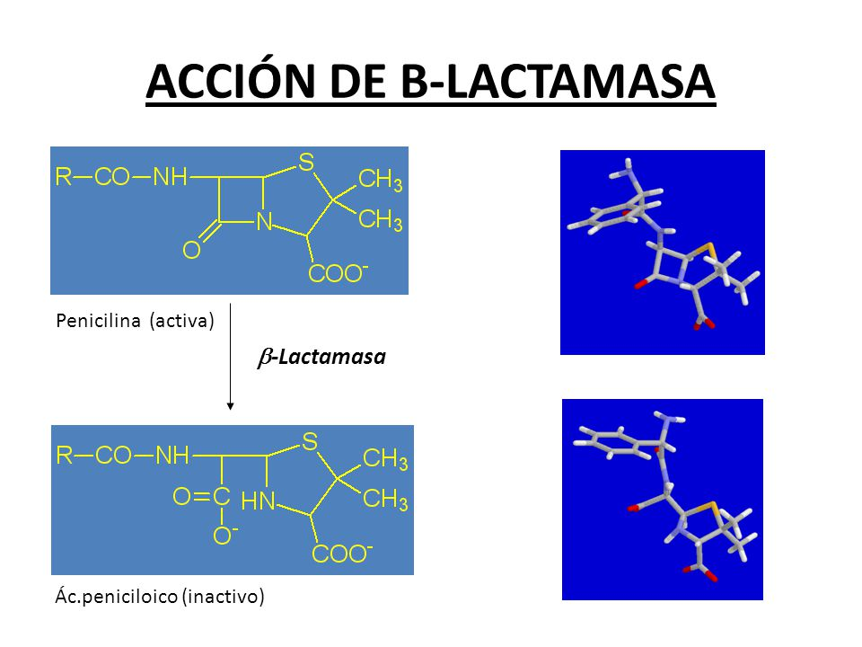 ACCIÓN DE B-LACTAMASA b-Lactamasa Penicilina (activa)