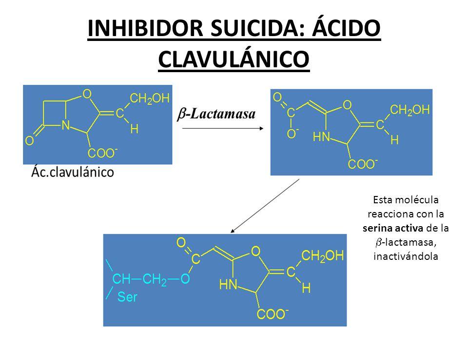INHIBIDOR SUICIDA: ÁCIDO CLAVULÁNICO