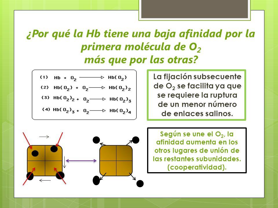 ¿Por qué la Hb tiene una baja afinidad por la primera molécula de O2