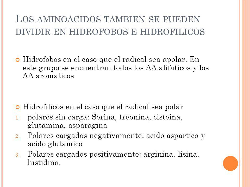 Los aminoacidos tambien se pueden dividir en hidrofobos e hidrofilicos