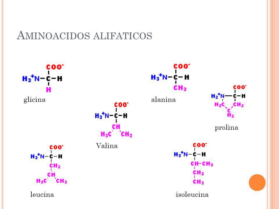 Aminoacidos alifaticos
