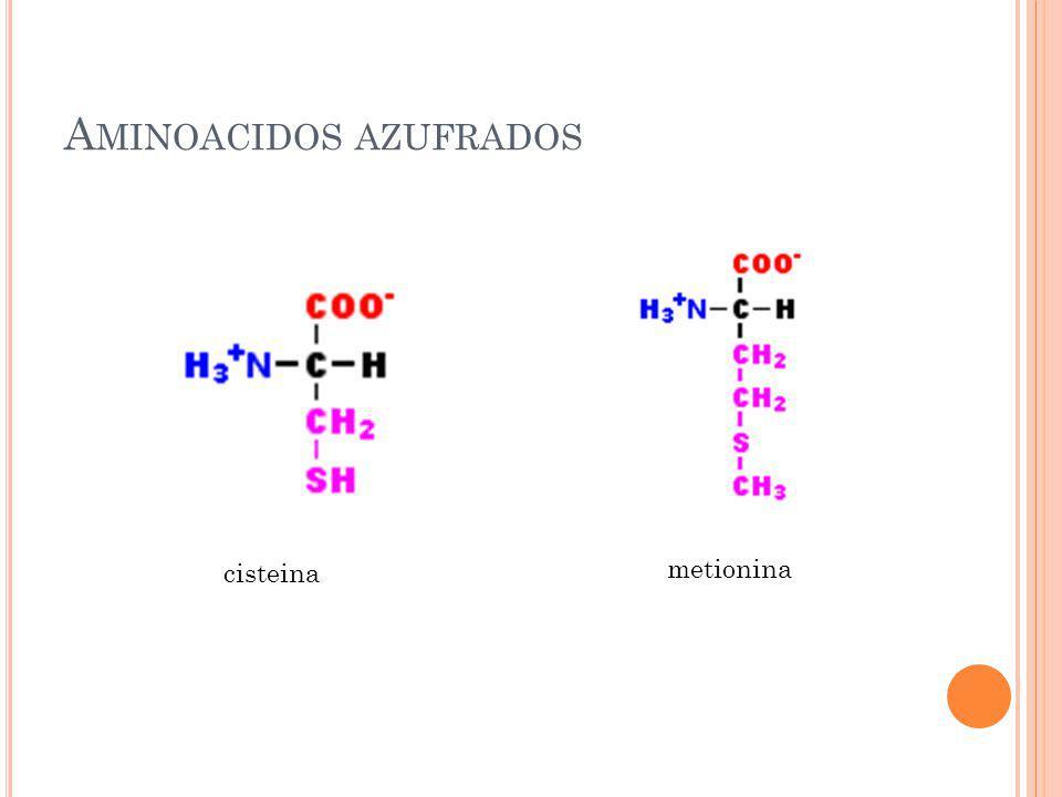 Aminoacidos azufrados