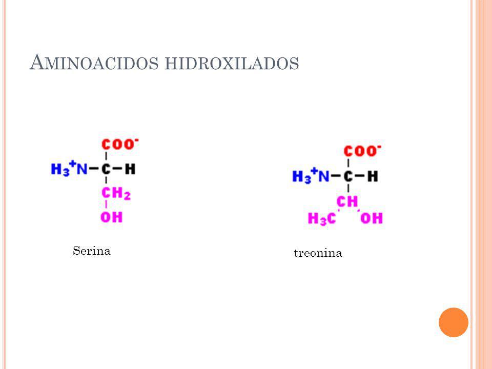 Aminoacidos hidroxilados