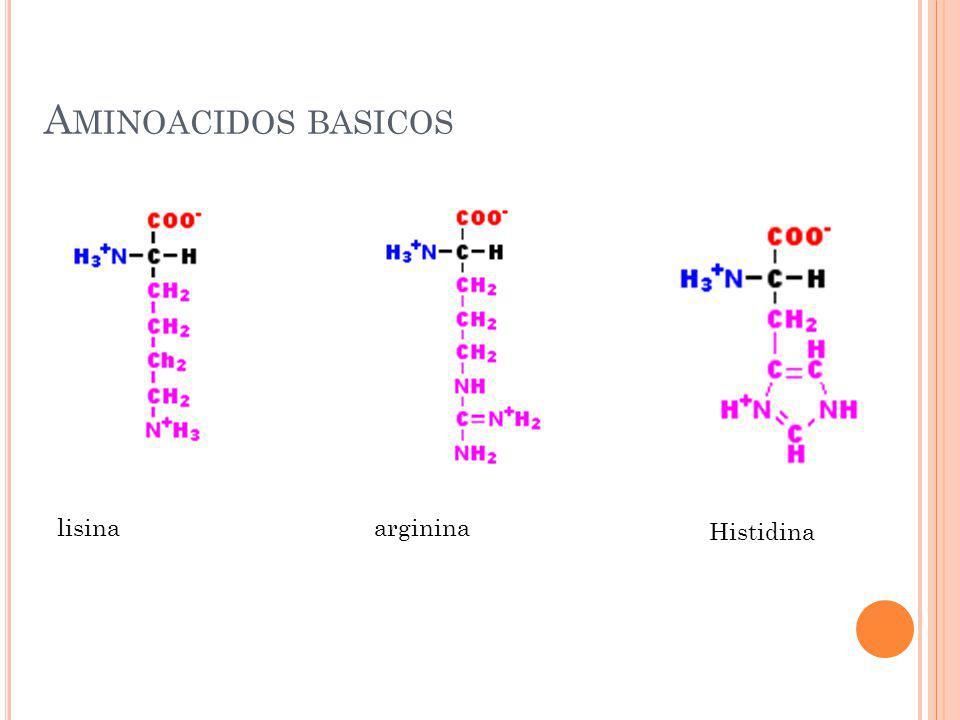 Aminoacidos basicos lisina arginina Histidina