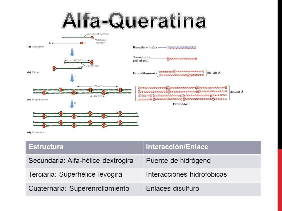 Alfa-Queratina Estructura Interacción/Enlace
