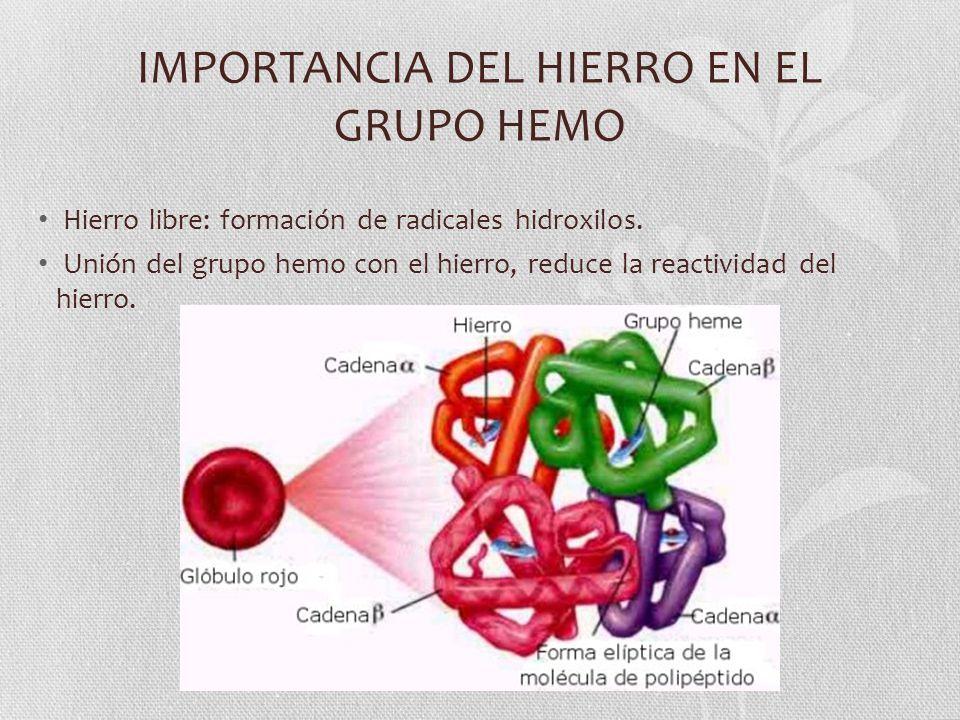 IMPORTANCIA DEL HIERRO EN EL GRUPO HEMO