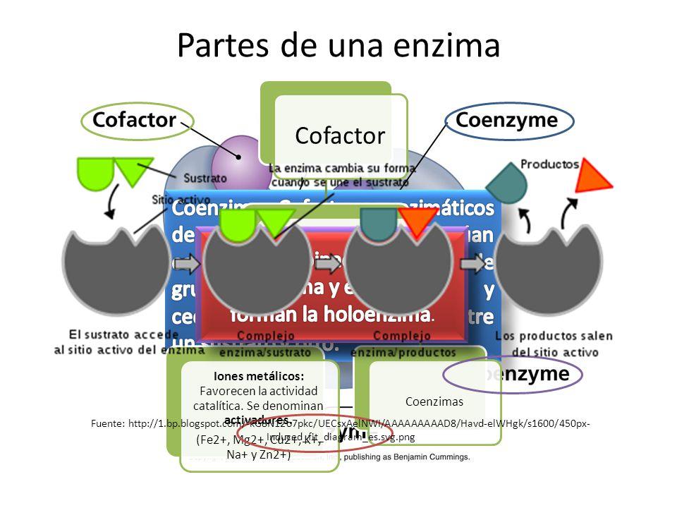 Partes de una enzima Cofactor