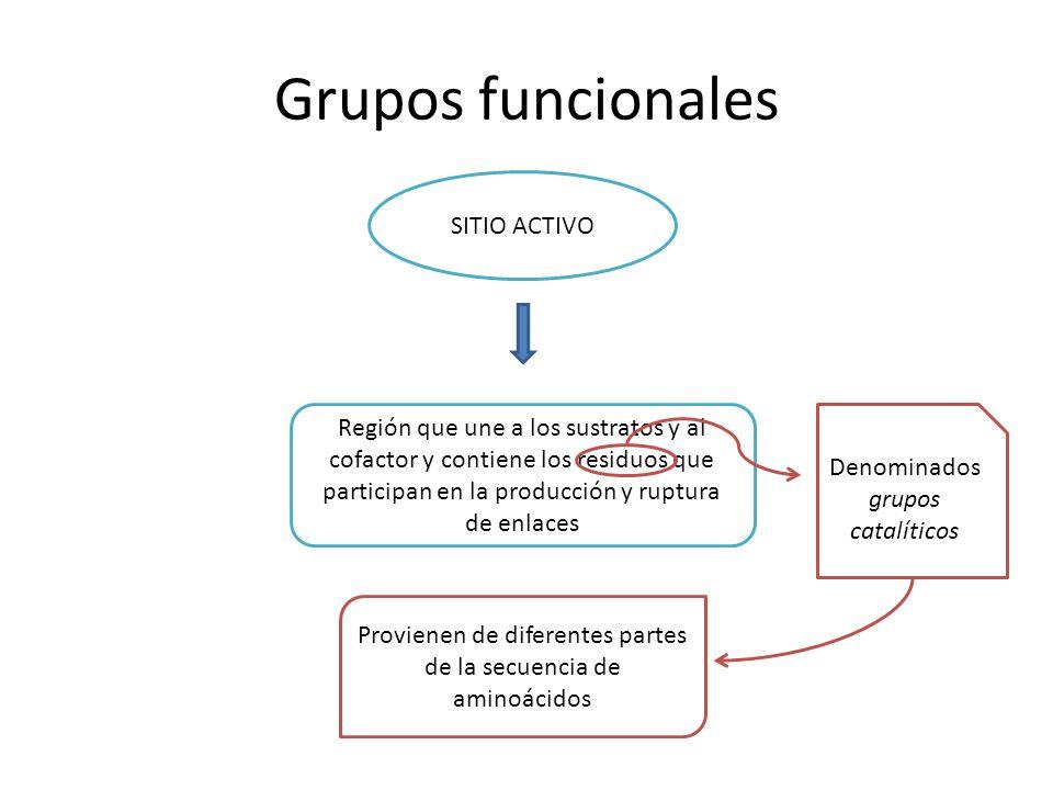 Grupos funcionales SITIO ACTIVO