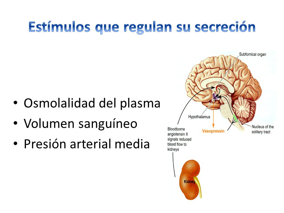 Estímulos que regulan su secreción