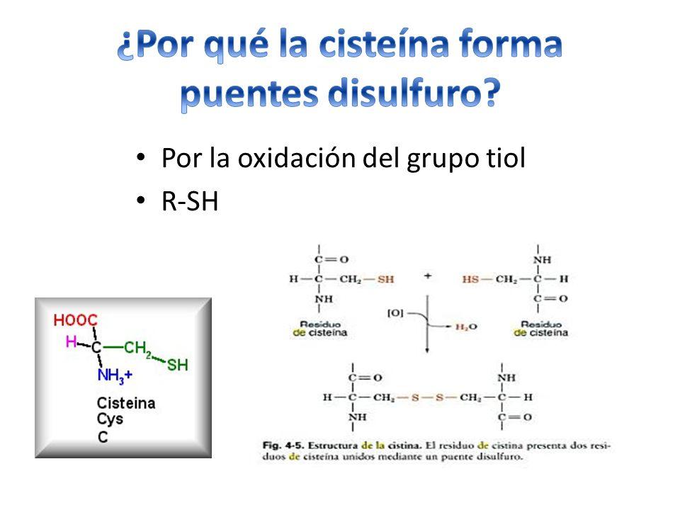 ¿Por qué la cisteína forma
