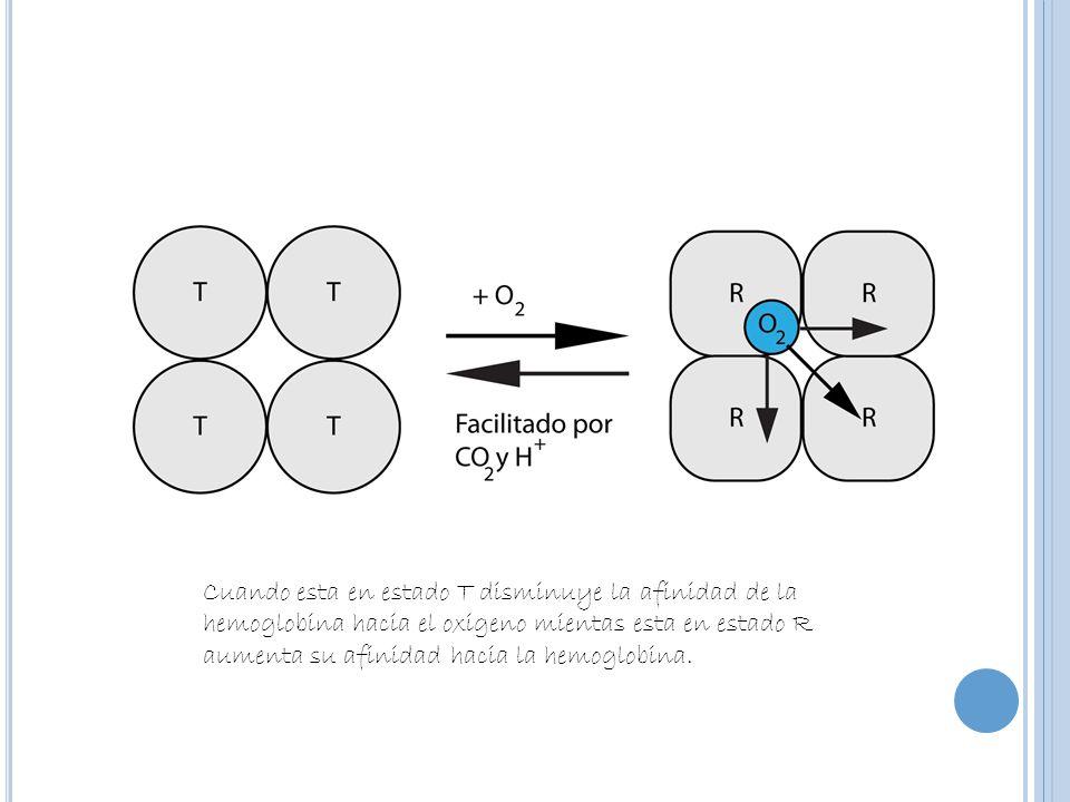 Cuando esta en estado T disminuye la afinidad de la hemoglobina hacia el oxigeno mientas esta en estado R aumenta su afinidad hacia la hemoglobina.