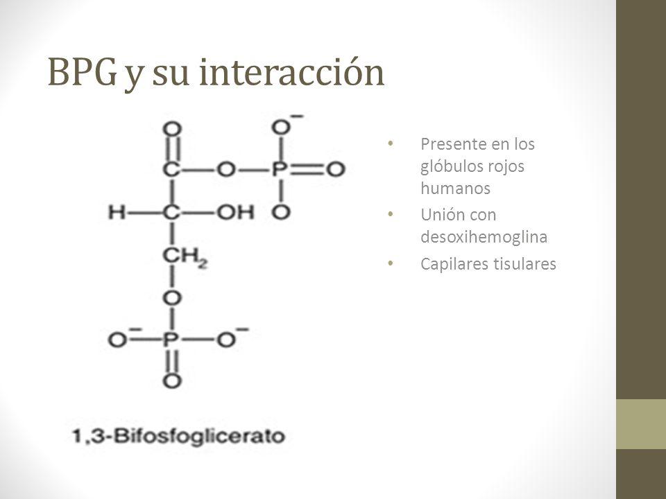 BPG y su interacción Presente en los glóbulos rojos humanos