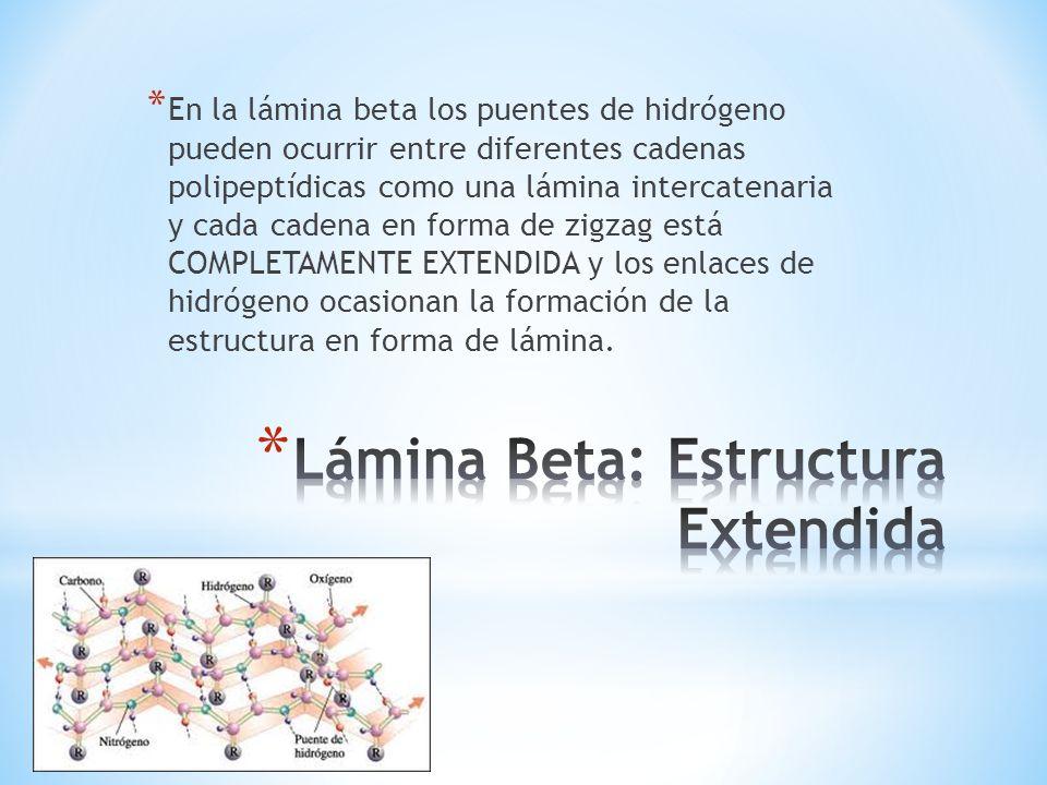 Lámina Beta: Estructura Extendida