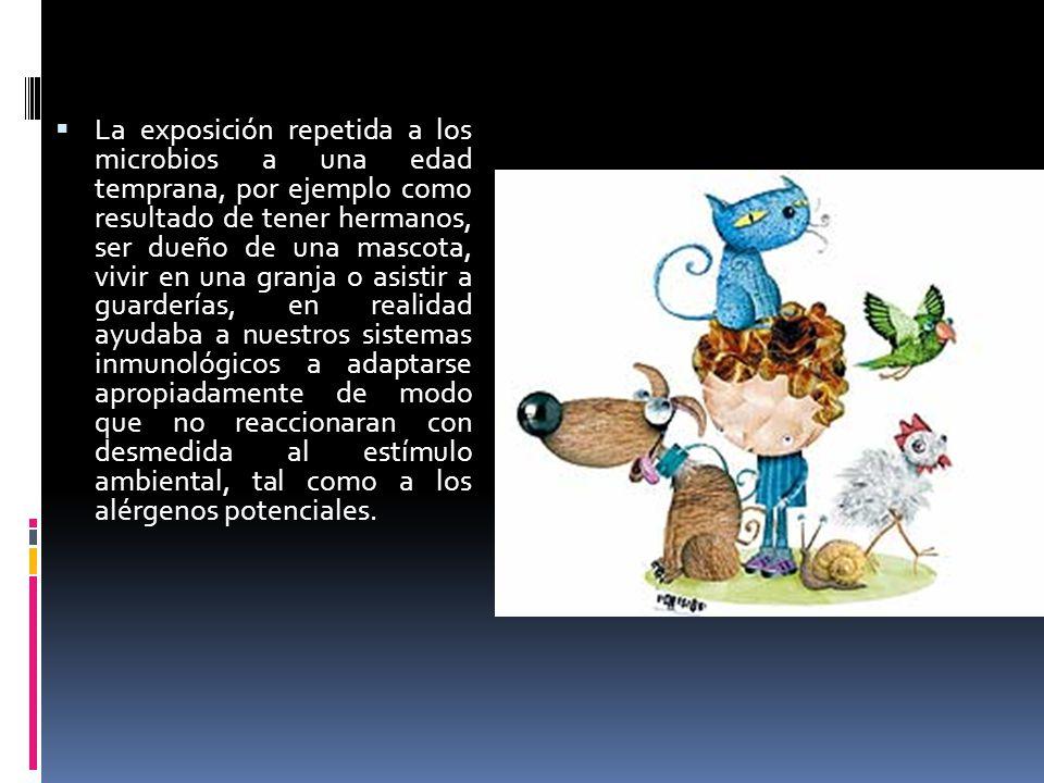 La exposición repetida a los microbios a una edad temprana, por ejemplo como resultado de tener hermanos, ser dueño de una mascota, vivir en una granja o asistir a guarderías, en realidad ayudaba a nuestros sistemas inmunológicos a adaptarse apropiadamente de modo que no reaccionaran con desmedida al estímulo ambiental, tal como a los alérgenos potenciales.