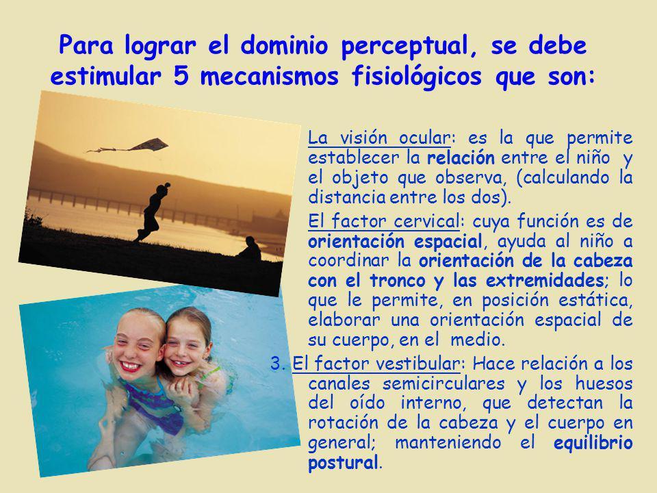 Para lograr el dominio perceptual, se debe estimular 5 mecanismos fisiológicos que son: