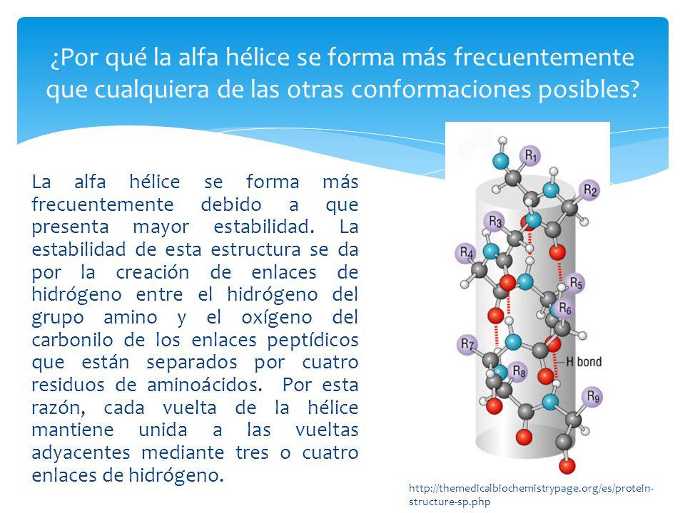¿Por qué la alfa hélice se forma más frecuentemente que cualquiera de las otras conformaciones posibles