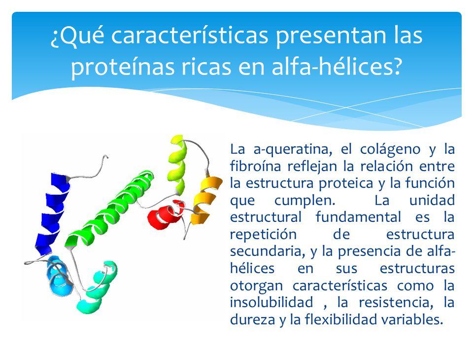 ¿Qué características presentan las proteínas ricas en alfa-hélices