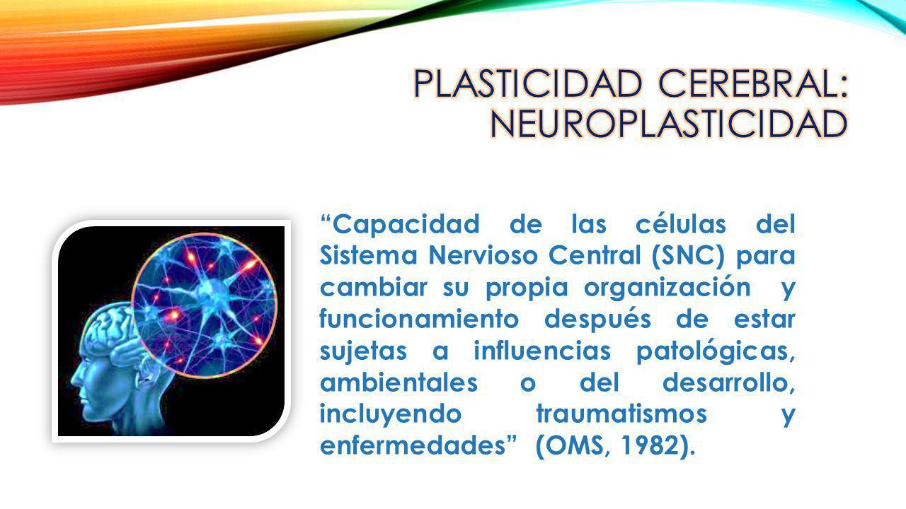 CPLASTICIDAD CEREBRAL: NEUROPLASTICIDAD