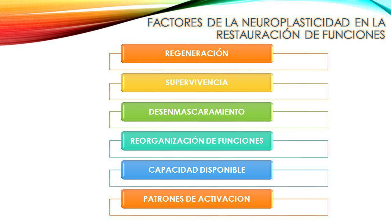 Factores de la neuroplasticidad en la restauración de funciones