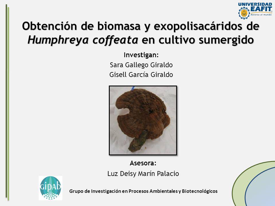 Investigan: Sara Gallego Giraldo Gisell García Giraldo