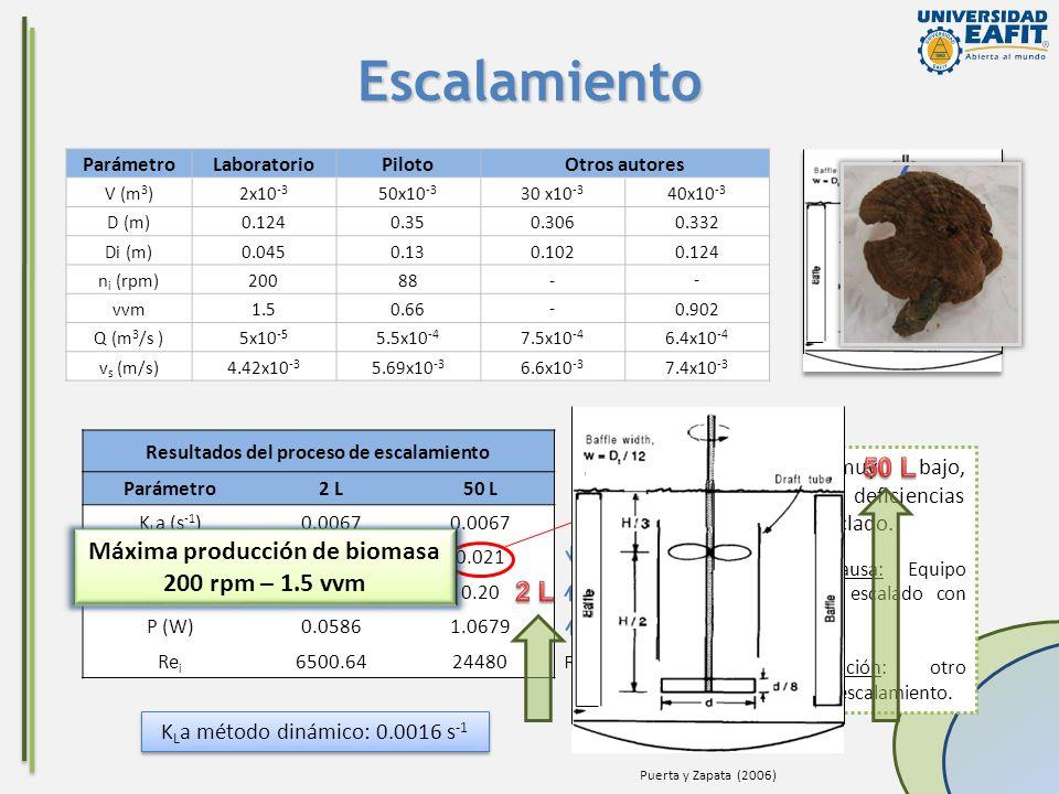 Resultados del proceso de escalamiento Máxima producción de biomasa