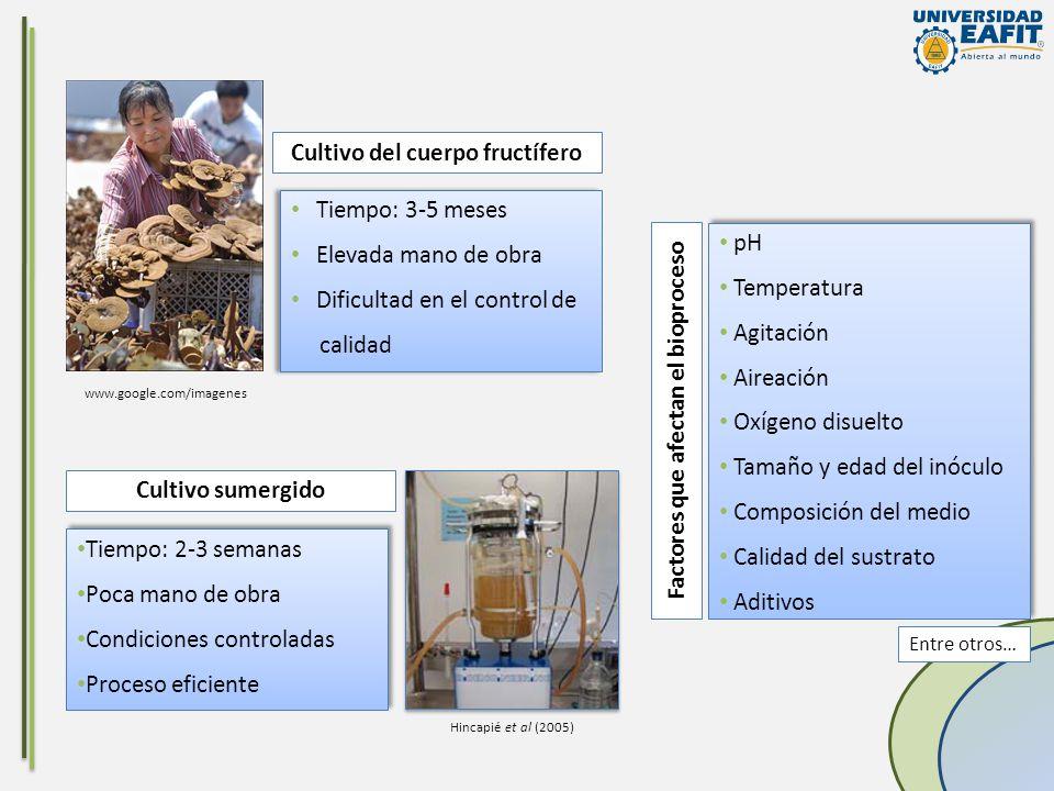 Cultivo del cuerpo fructífero Factores que afectan el bioproceso