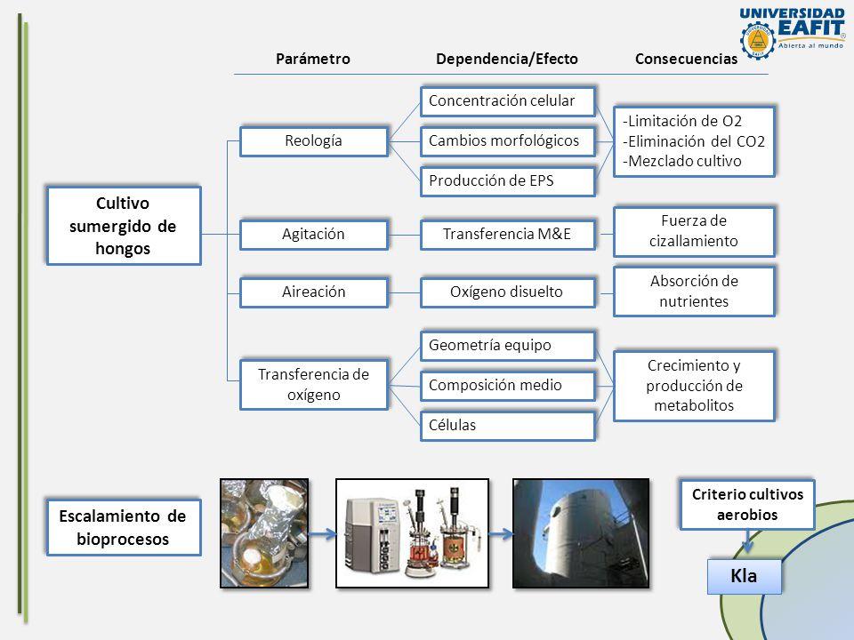 Kla Cultivo sumergido de hongos Escalamiento de bioprocesos Reología