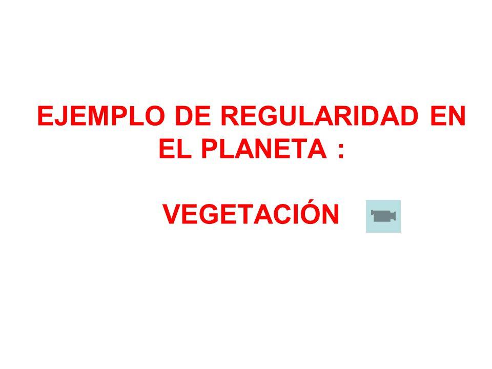 EJEMPLO DE REGULARIDAD EN EL PLANETA : VEGETACIÓN