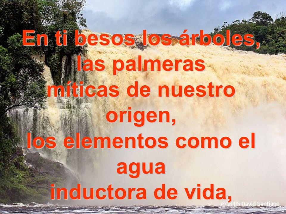 En ti besos los árboles, las palmeras míticas de nuestro origen, los elementos como el agua inductora de vida,