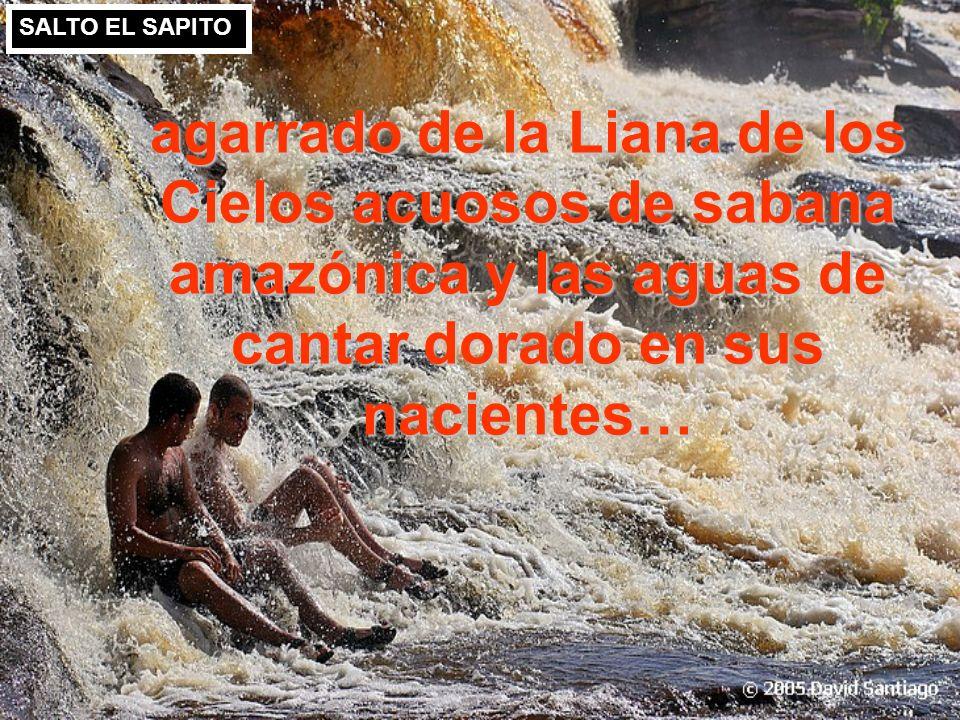 SALTO EL SAPITO agarrado de la Liana de los Cielos acuosos de sabana amazónica y las aguas de cantar dorado en sus nacientes…