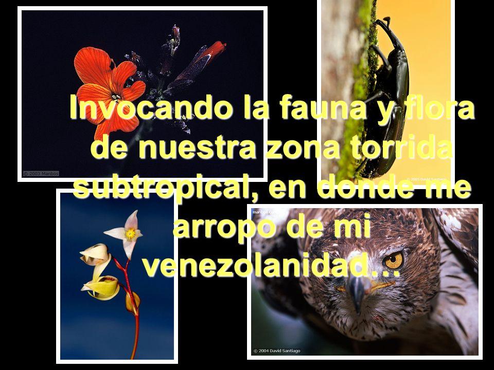 Invocando la fauna y flora de nuestra zona torrida subtropical, en donde me arropo de mi venezolanidad…