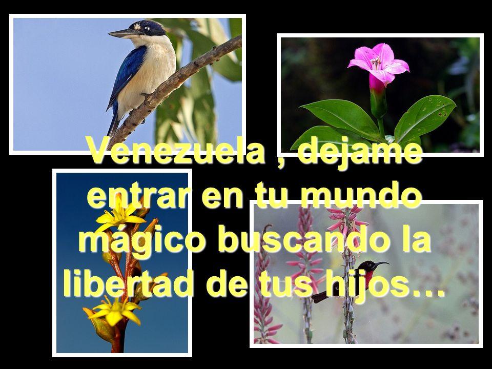 Venezuela , dejame entrar en tu mundo mágico buscando la libertad de tus hijos…