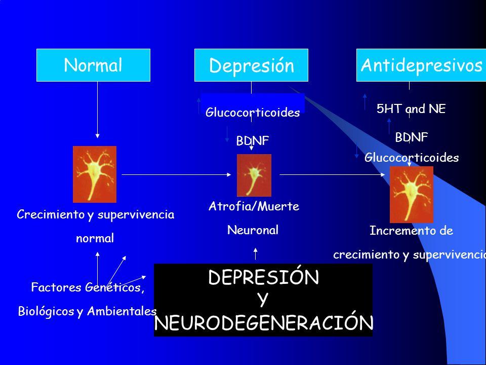 Depresión DEPRESIÓN Y NEURODEGENERACIÓN Normal Antidepresivos