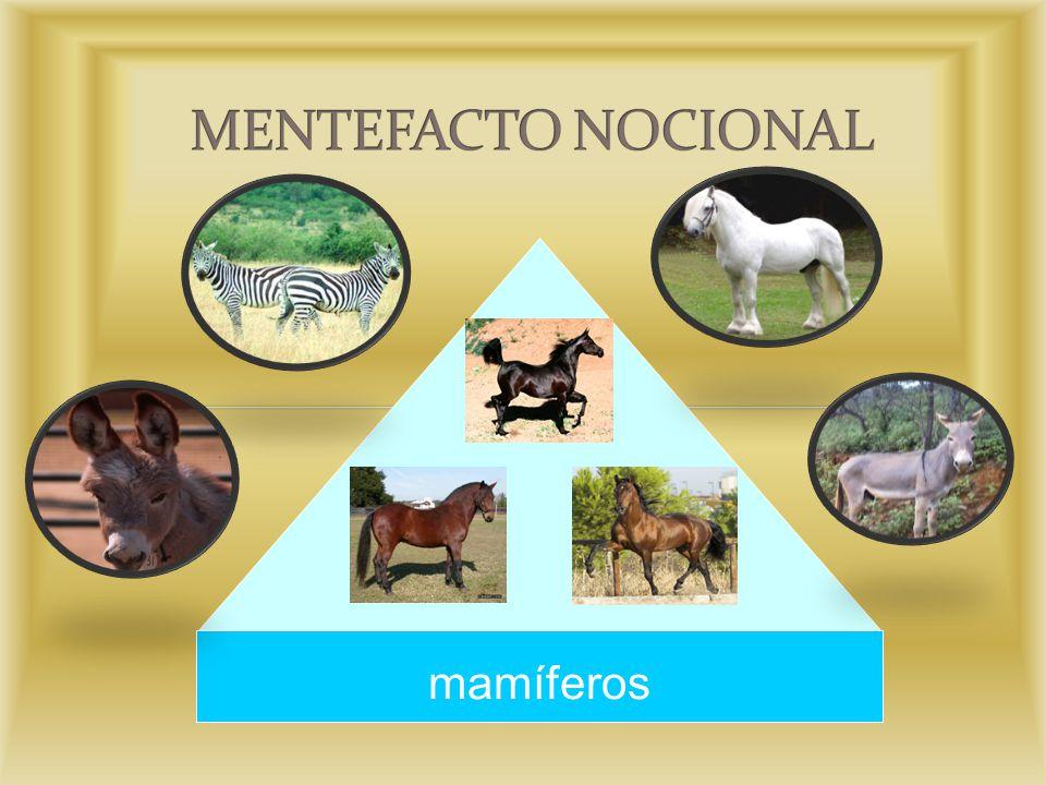 MENTEFACTO NOCIONAL mamíferos