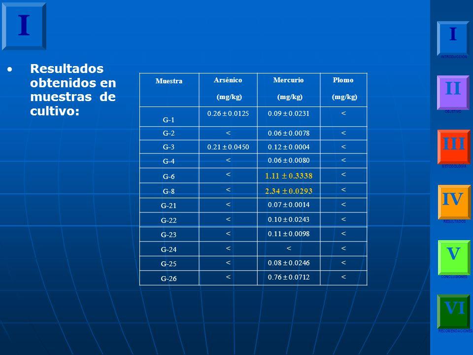 I I II III IV V VI Resultados obtenidos en muestras de cultivo: