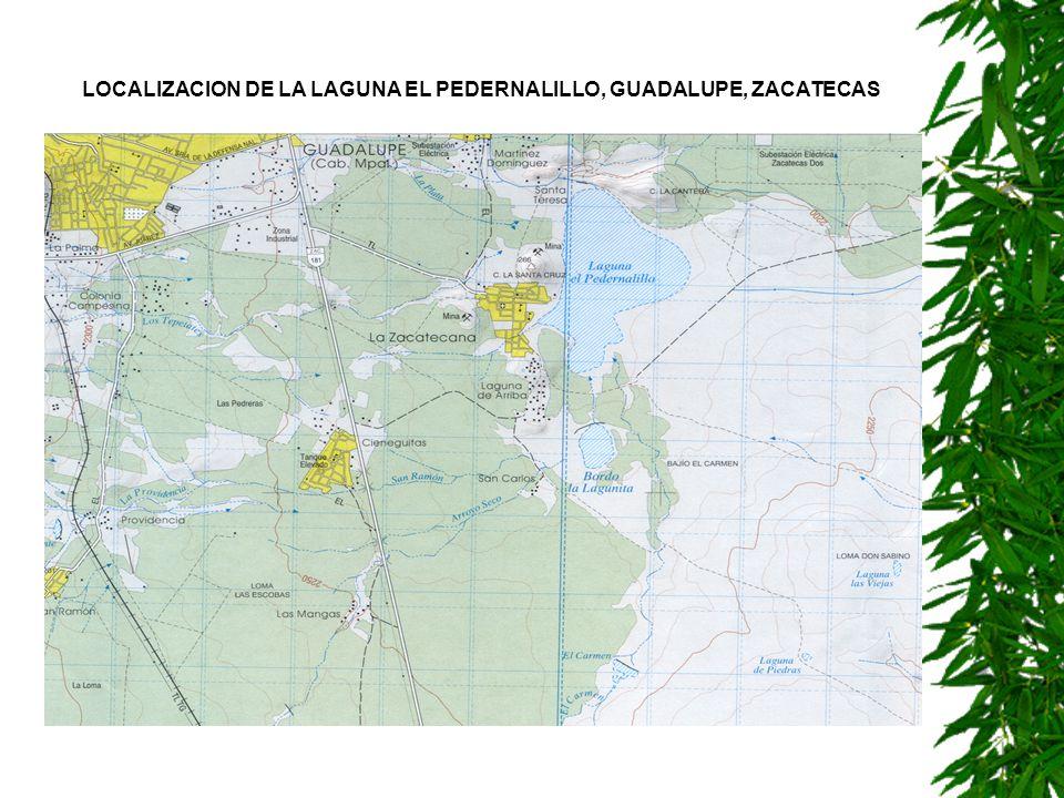 LOCALIZACION DE LA LAGUNA EL PEDERNALILLO, GUADALUPE, ZACATECAS