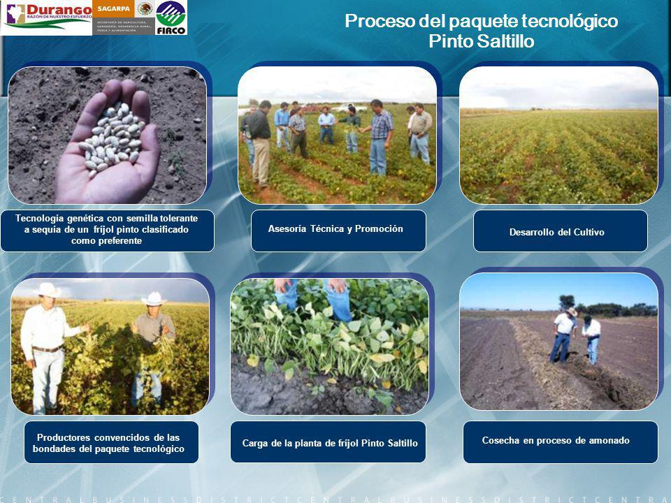 Proceso del paquete tecnológico Pinto Saltillo