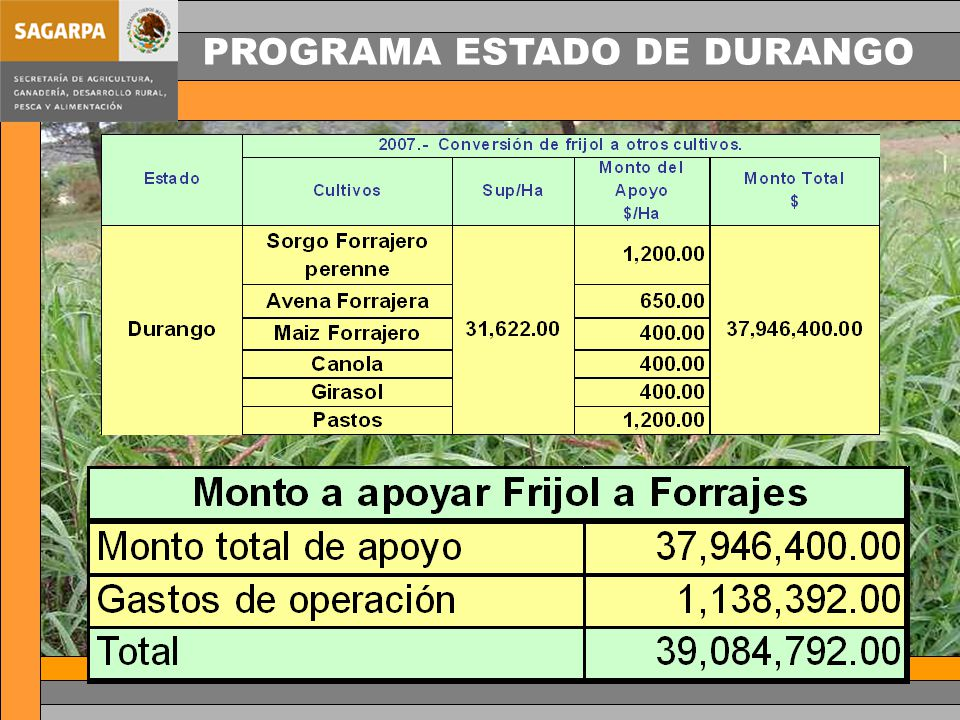 PROGRAMA ESTADO DE DURANGO
