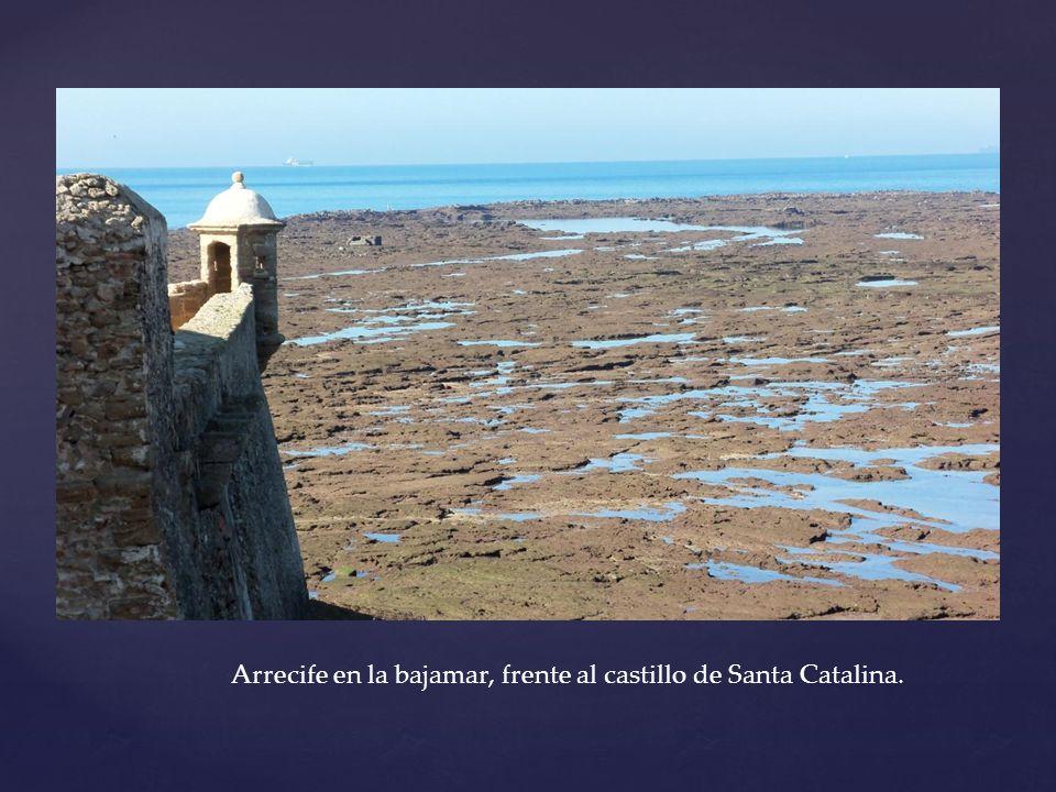 Arrecife en la bajamar, frente al castillo de Santa Catalina.