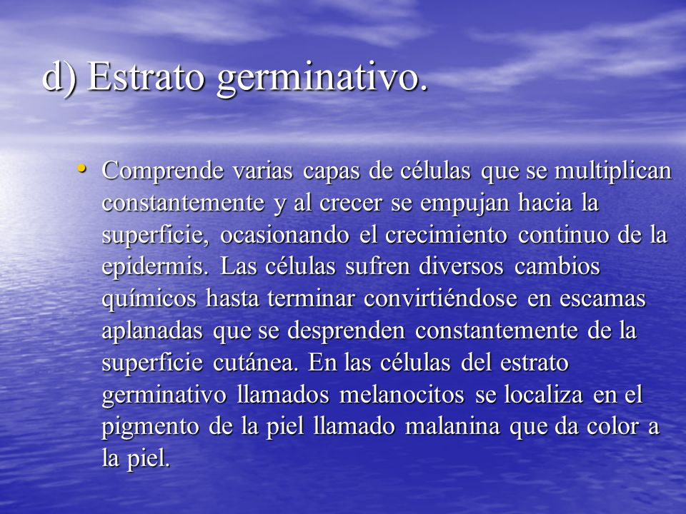 d) Estrato germinativo.