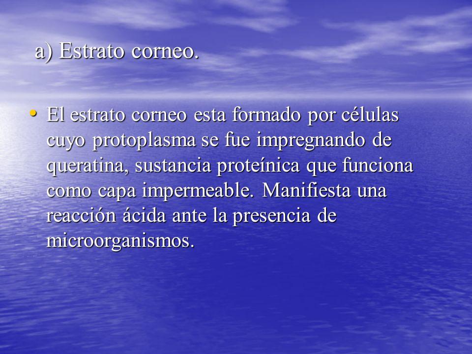 a) Estrato corneo.